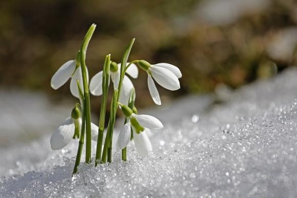 hóvirág ízületi fájdalom