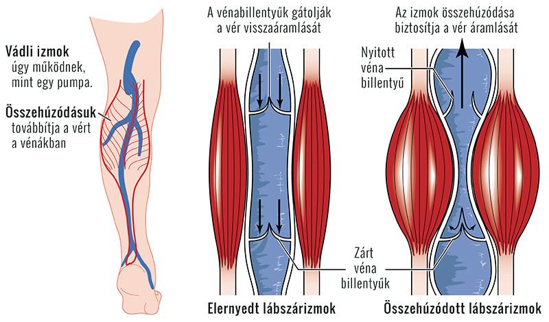 a láb ízületei, mint a kezelés)