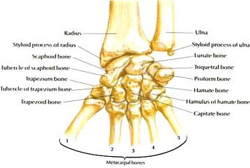 carpal artrosis kezelés)