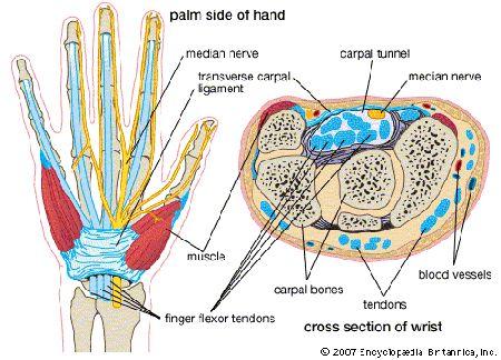 carpal sérülés