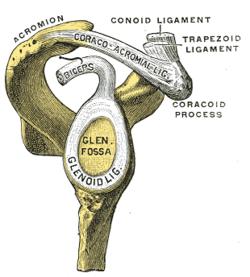 clavicularis arthrosis)