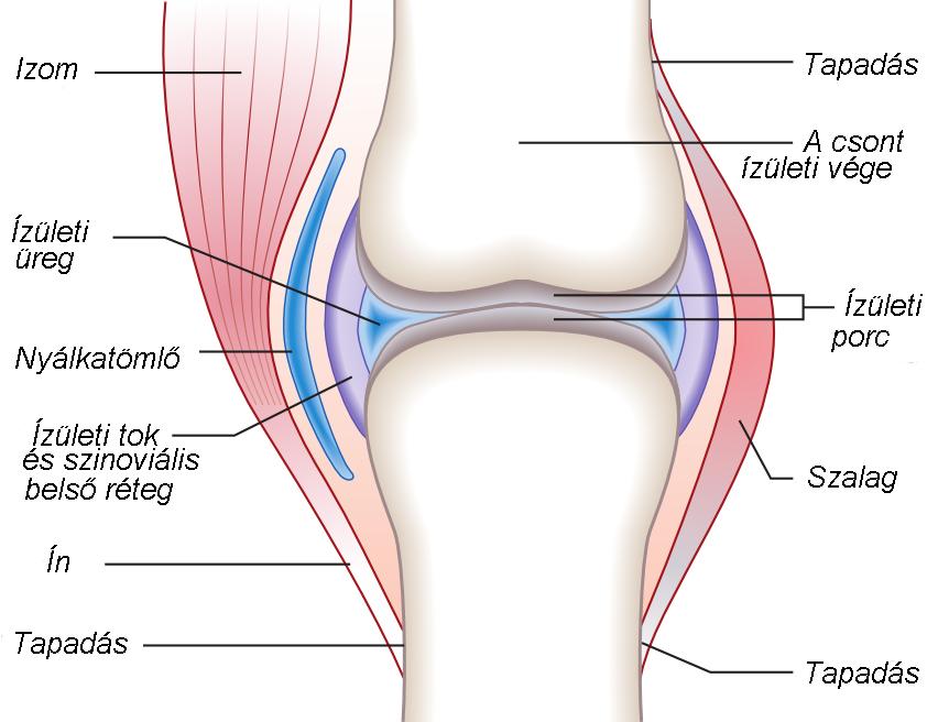 Ízületi mobilitás helyreállítása artrózissal - Csípőfájdalom