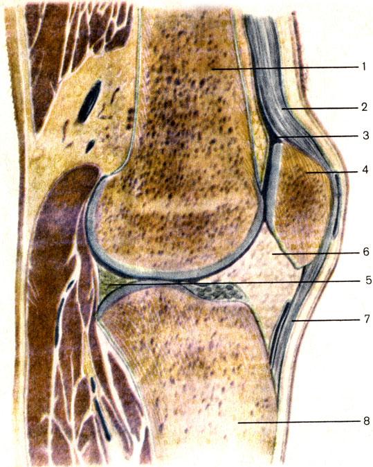 a boka kezelés medialis ligamentuma)