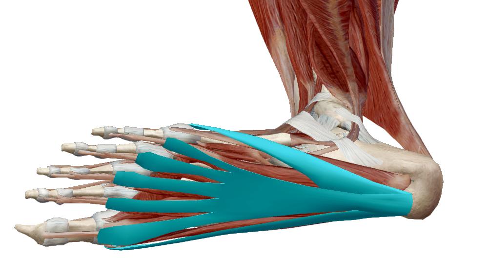 ízületi fájdalom a láb közelében a lábánál