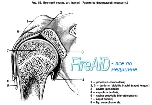 átfogó artróziskezelés)