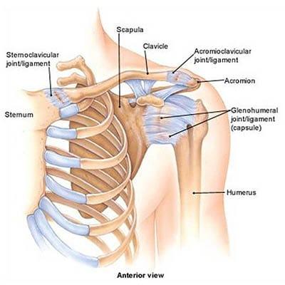 kar helyreállítása a vállízület törése után