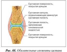 A lábcsont ízületei: okai, tünetei, a betegség kezelése