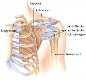 a vállízület tüneteinek kezelése)