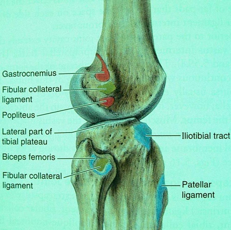 boka ízület ligamentum-töréskezelése