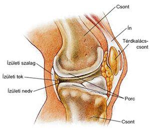 a térd deformáló artrózisának mértéke a lábak és a nyak ízületei