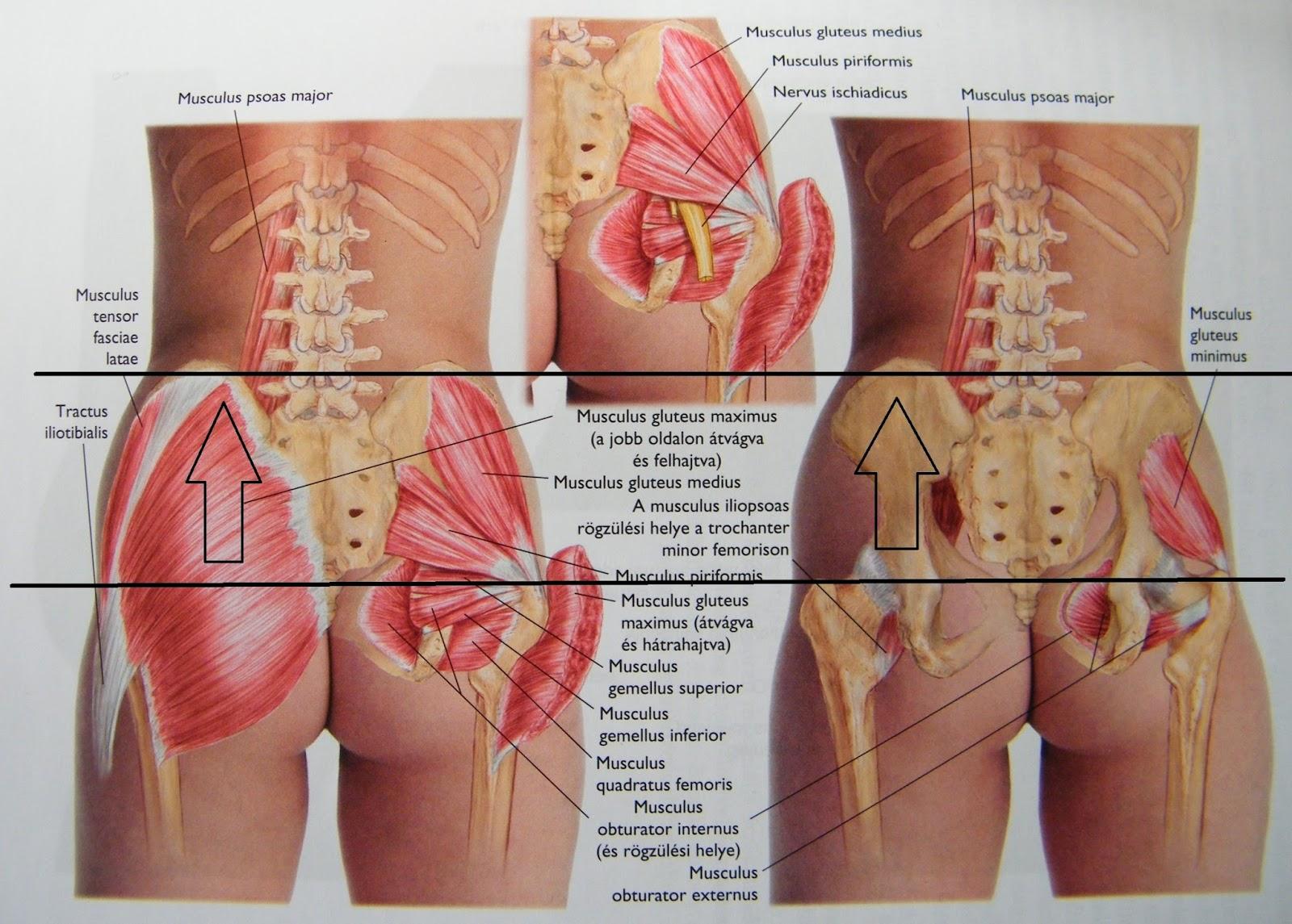 fájdalom a csípőízület felső részén ágensek deformáló artrózis kezelésére