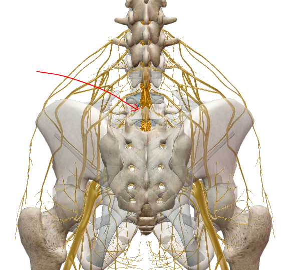 a csípőízület felé sugárzó derékfájás
