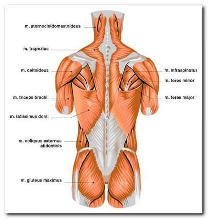 mellkasi osteochondrozis fájdalomcsillapítás