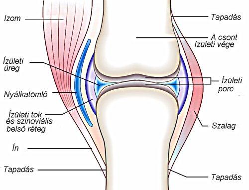 csontok ízületi kezelése)