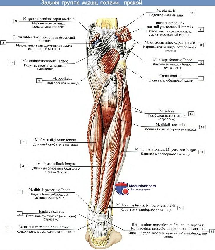 fájó ligamentumok boka kezelése glükozamin-kondroitin mms