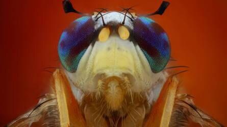 Protect Junior szúnyog- és kullancsriasztó permet 6 hónapos kortól ml - Tesco Bevásárlás